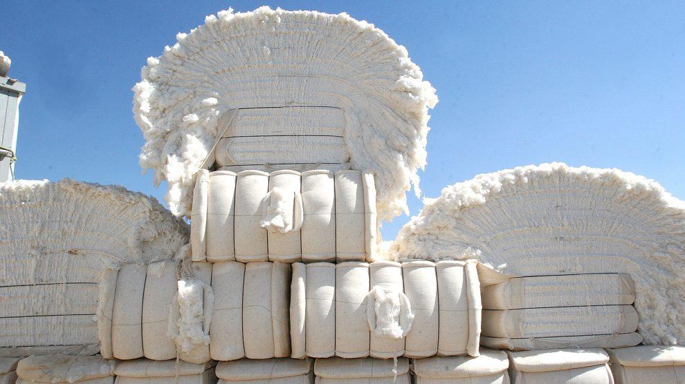Resultado de imagem para Consultor afirma que há retorno da demanda por algodão, porém potencial de crescimento da oferta ainda é maior, e isto exige atenção dos produtores